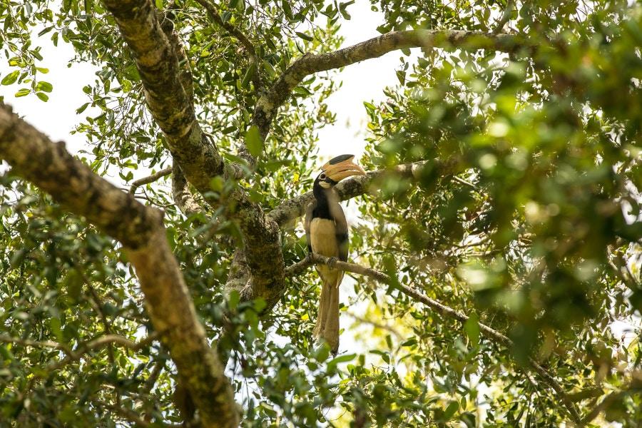 Circuit ornithologique au Sri Lanka